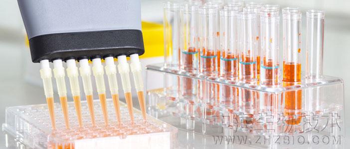 实验室支原体污染检查验证六种鉴别办法简述